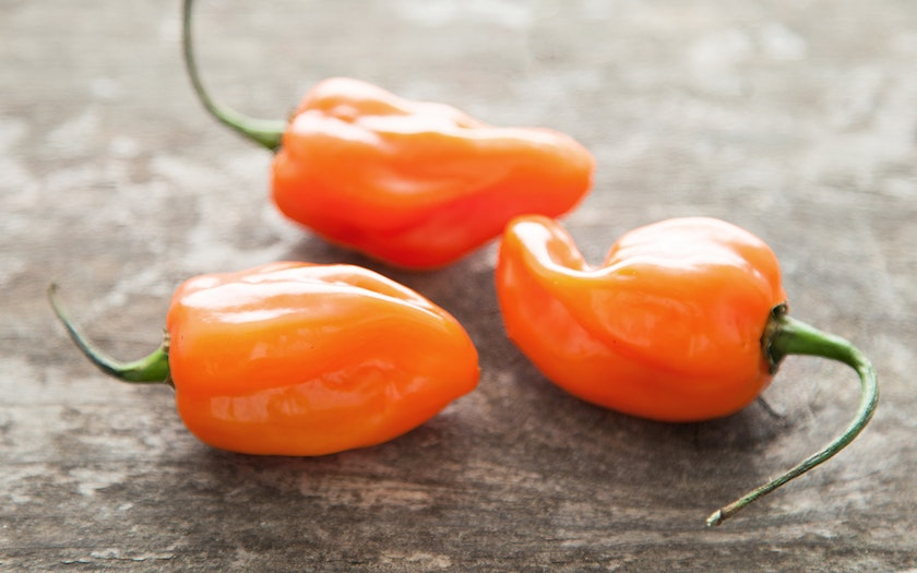 Organic & Fair Trade Habanero Pepper Trio (Mexico)
