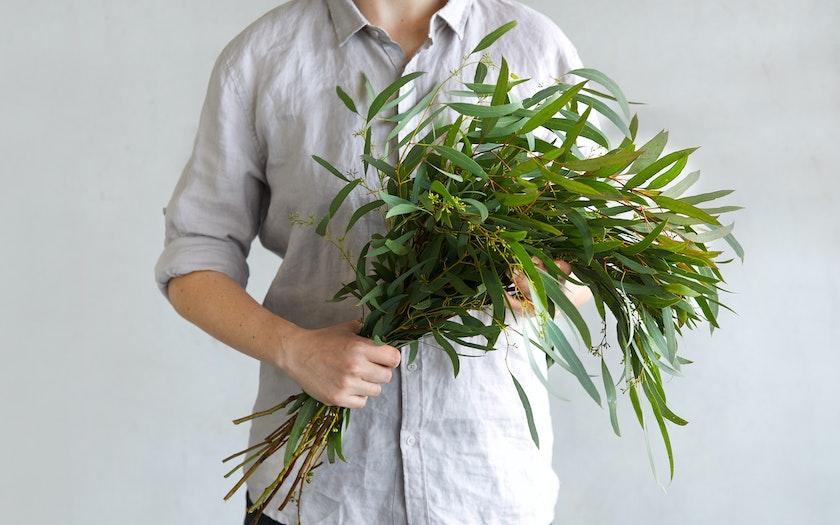Seeded Willow Eucalyptus