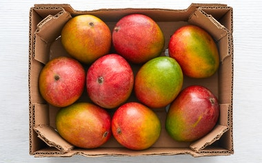 Case of Organic Kent Mango (Mexico)