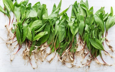 Wild-Foraged Ramps (3 lb)