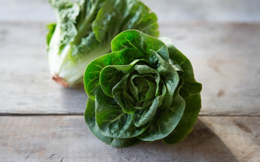 Organic Little Gem Lettuce Duo
