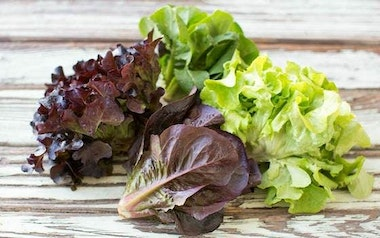 Organic Mixed Baby Lettuce Trio