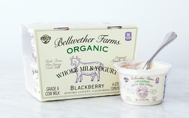 Organic Blackberry Whole Milk Yogurt Cups