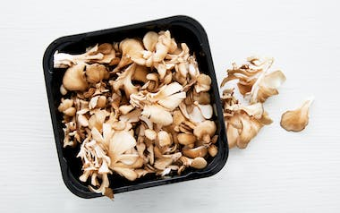Organic Bulk Maitake Frondosa (Hen of the Woods) Mushrooms