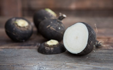 Organic Large Black Spanish Radish