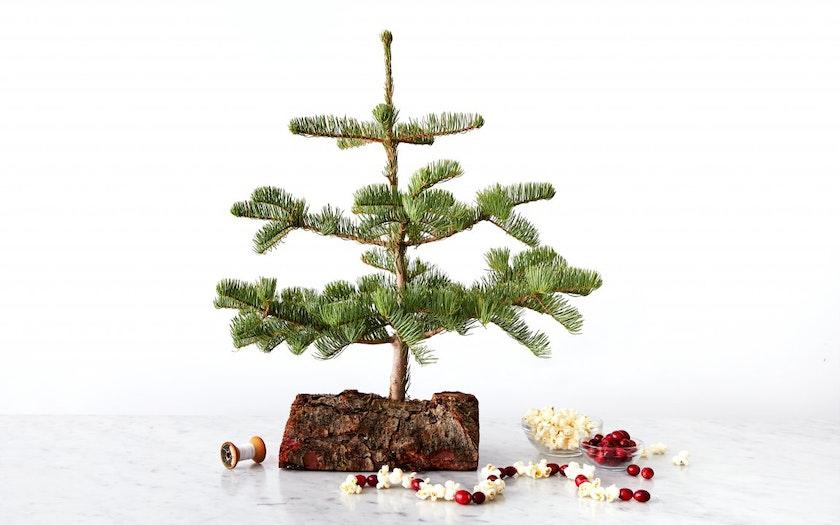 California-Grown Baby Christmas Tree