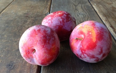 Organic Festival Red Pluot
