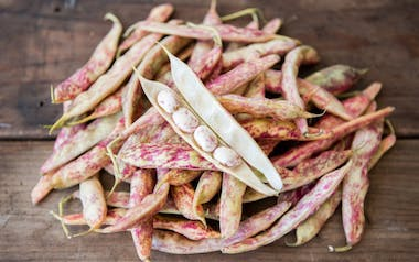 Organic Tongue of Fire Cranberry Beans