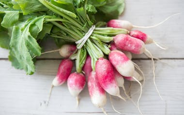 Organic French Breakfast Radish