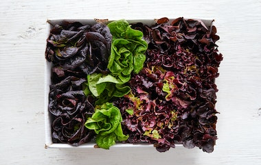 Case of Organic Mixed Baby Lettuce