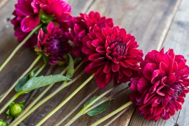 Farmer's Choice Dahlias
