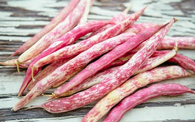 Organic Tongue of Fire Shelling Beans