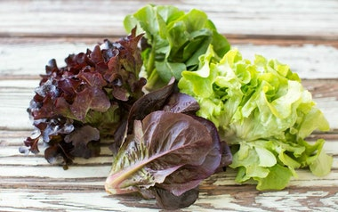 Organic Mixed Baby Head Lettuces