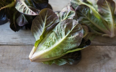 Organic Red Baby Romaine Lettuce