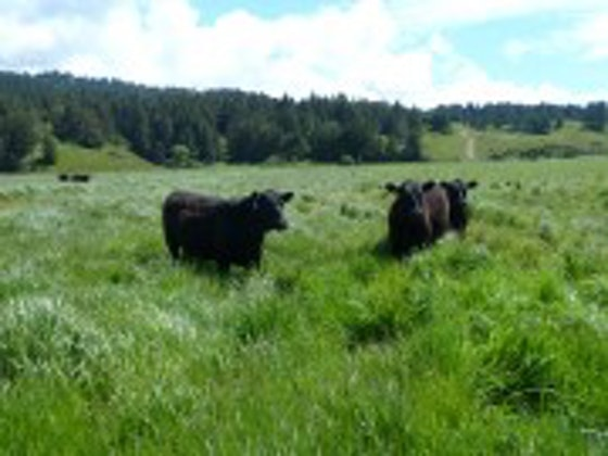 Prather Ranch Lost Coast 100% Grass-fed Beef